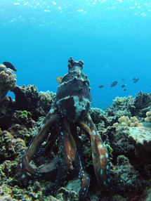 Octopus Posture.jpg