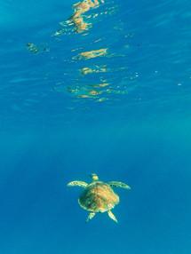 Turtle Reflecting on Water.jpg