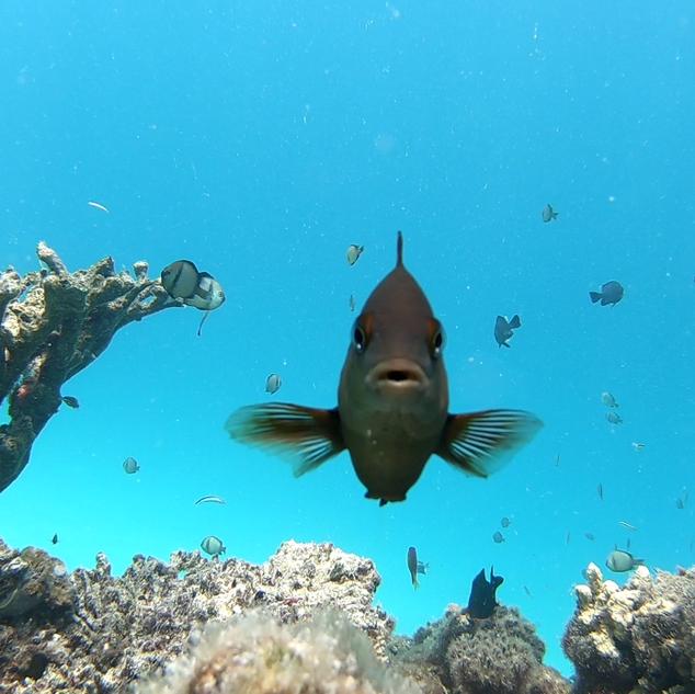 Marine Bio 1.PNG