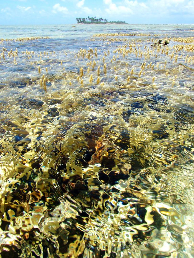 Low tide little bustard.jpg