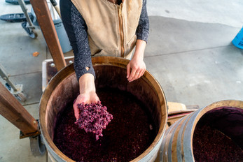 Gamay feremented 100% whole cluster in open top barrels heading to the press after 23 days on skins.