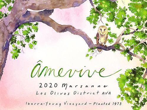 2020 Ibarra - Young Old Vine Marsanne