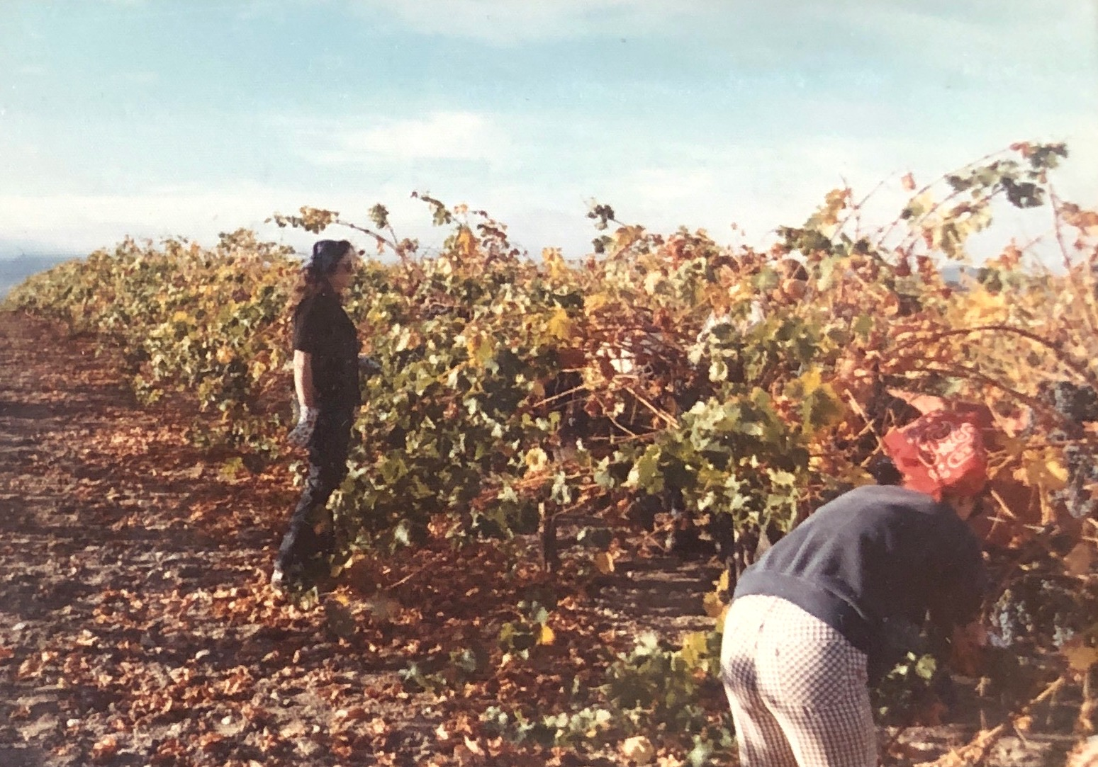 One of the first harvests in 1971 or 1972.