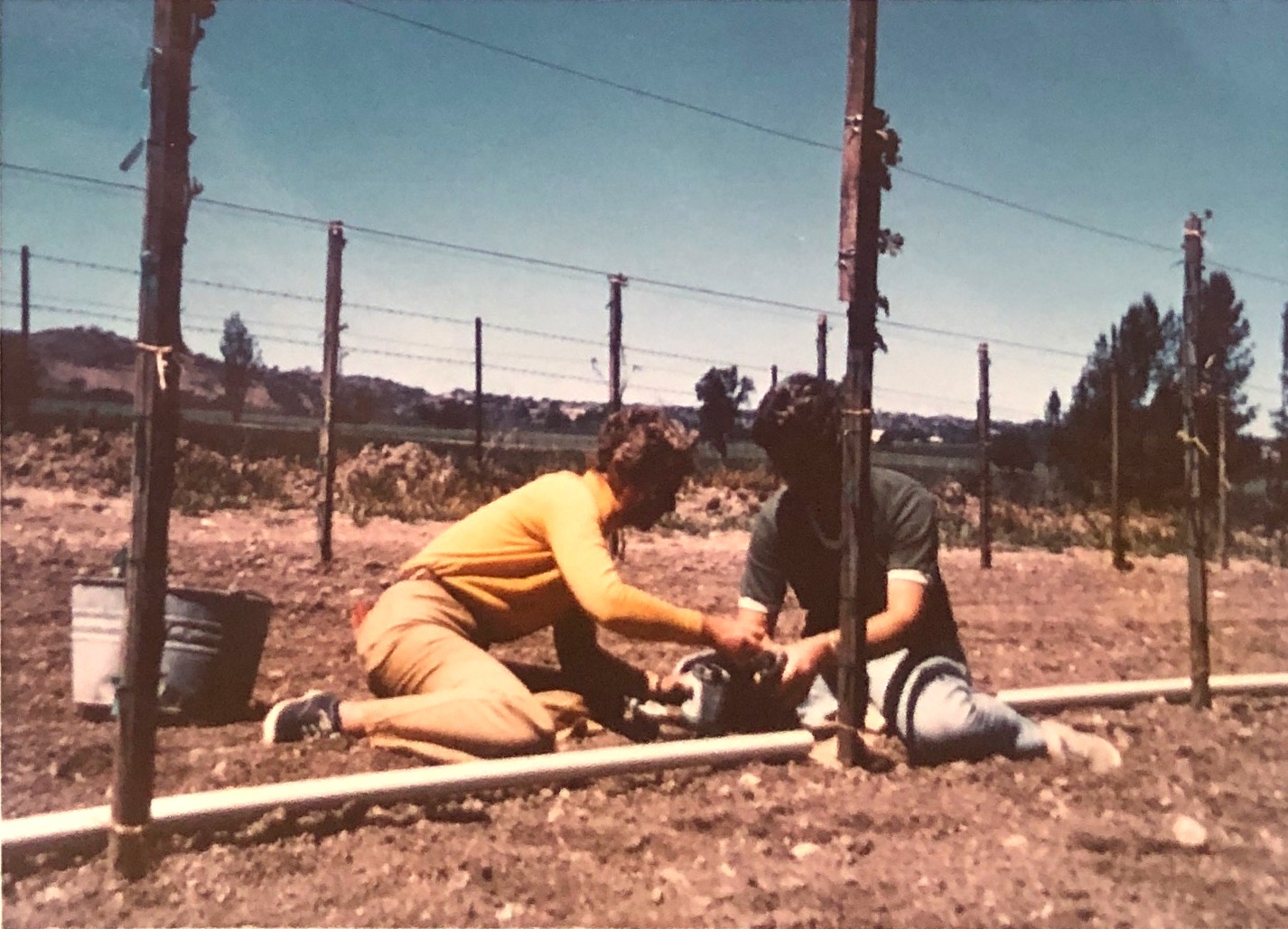 Charlotte Young and Claire Bettencourt planting the first vines in 1971.