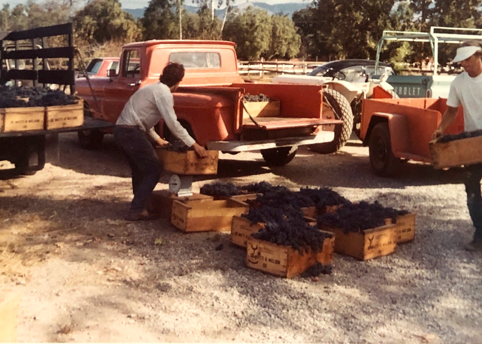 The first harvest in 1972 or 1973