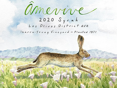 2020 Ibarra - Young Old Vine Syrah