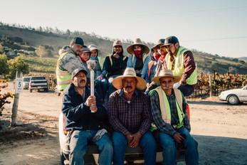 The crew on harvest morning at Shokrian Vineyard