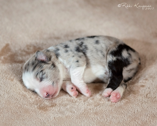 Pink_Puppy (8) copy