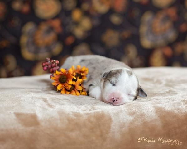 White_Puppy (3) copy