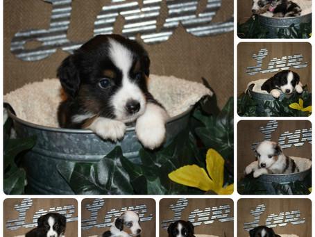 Lexi's litter turns 4 weeks