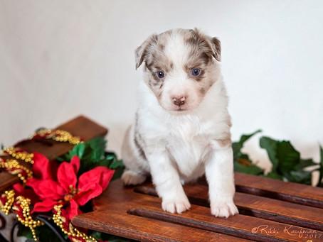 Reckon Puppies 4 Weeks