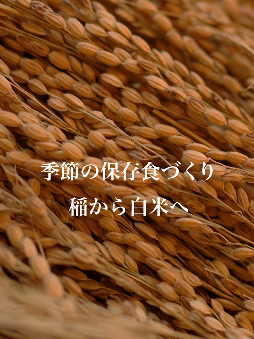 お米WS.jpg