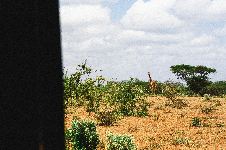africaquatro