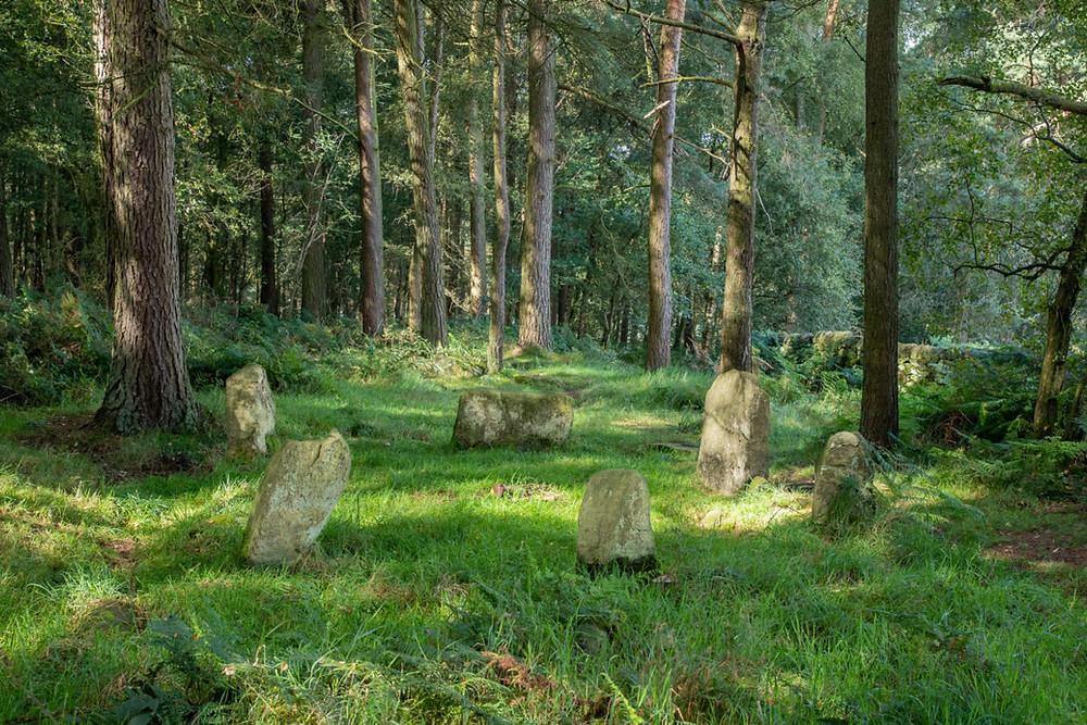 Un cercle de 6 pierre au milieu d'un clairière verdoyante.
