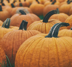 Pumpkins at Brookdale farms pumpkin patch