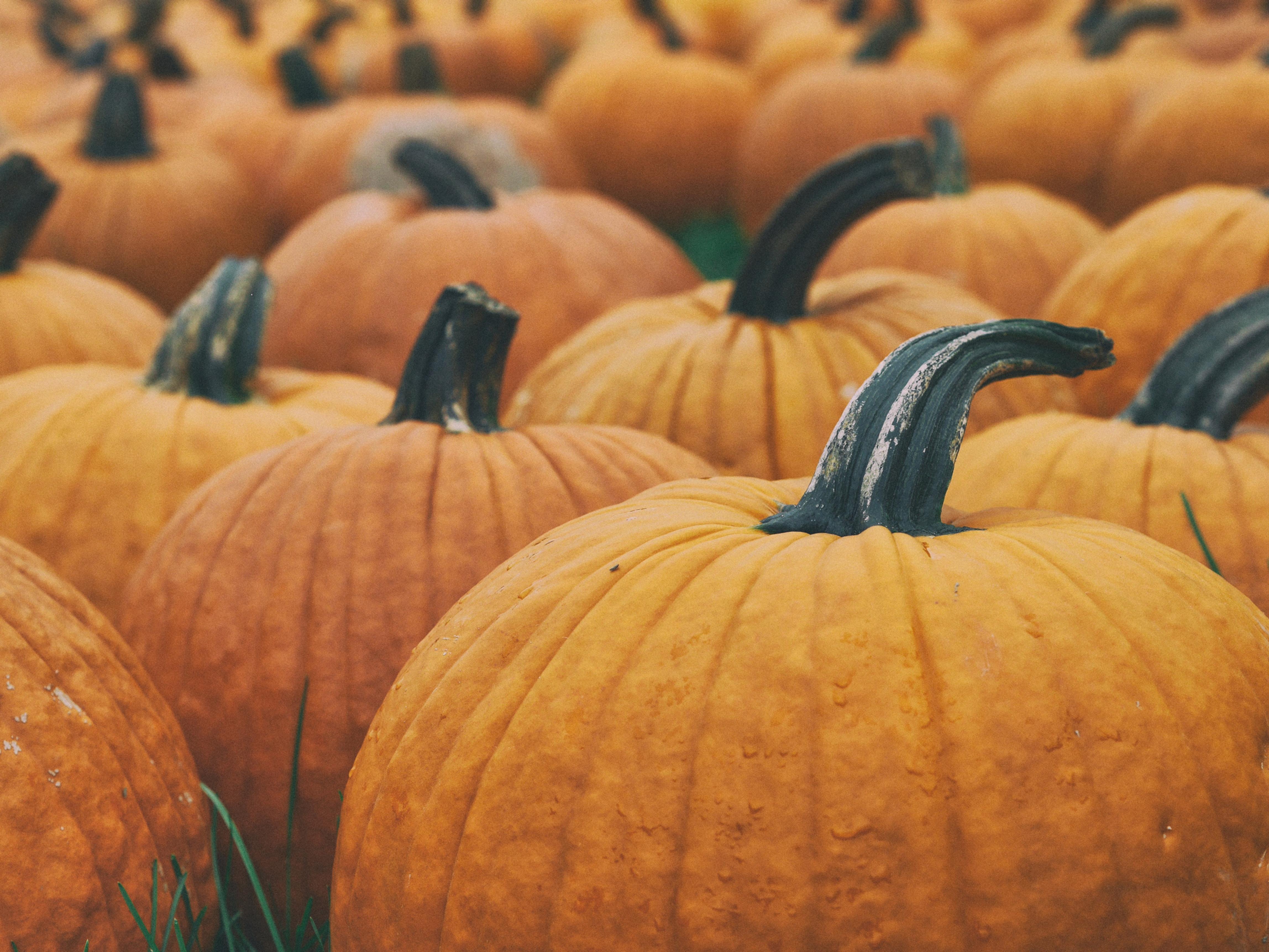 *Pumpkin Patch Mini Photoshoot