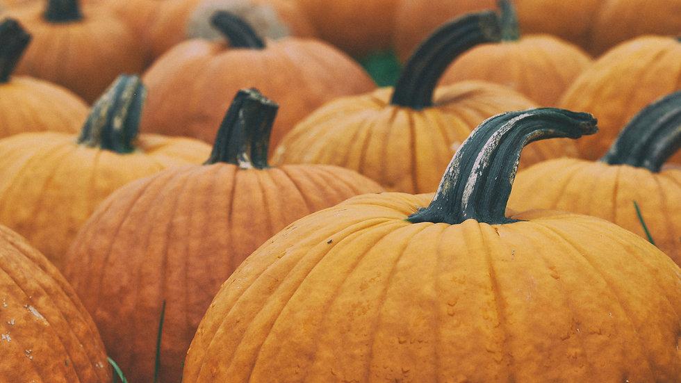 Pumpkin Bread Slice (Vegan)
