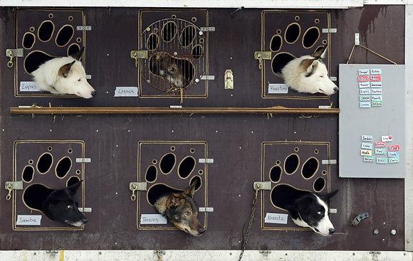 Šediváčkův Long, Deštné v Orlických horách 2020 (závody psích spřežení)