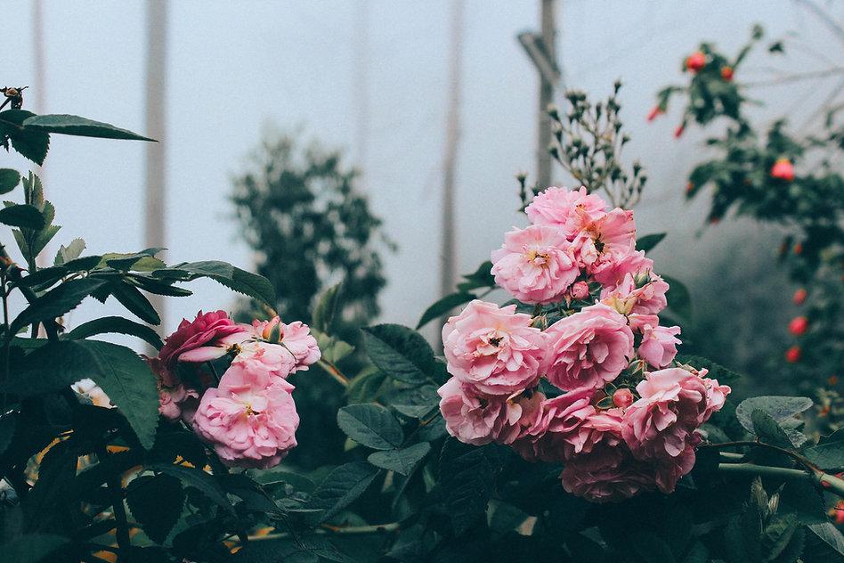 Fleurs sechées
