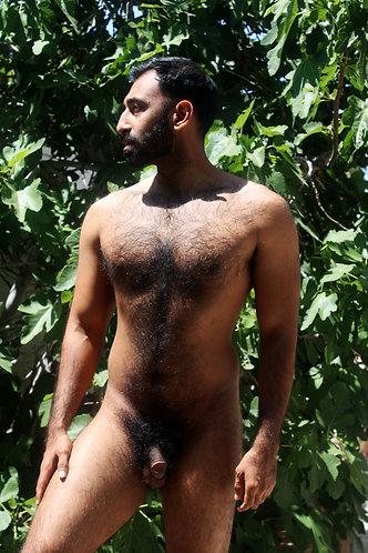 Fig Tree Ali