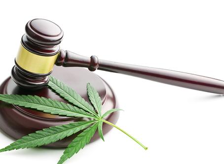 Survol de la législation relative à la possession du cannabis au Québec