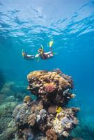103650-634 Snorkelling_Coral_Great Barri