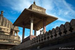 Langur Monkey in Orchha Palace