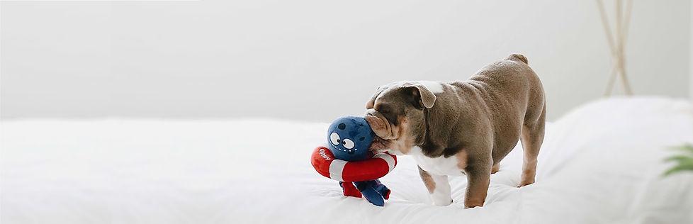 tugtopus_bulldog.jpg
