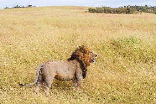 Lions Gate 8.8.20