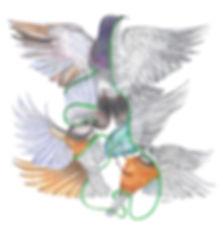 Cerys Knighton artist, Polarisation, polar, divide, bird art, pigeon, pointillism, pen and ink, bipolar, medical humanities, manic depression, phd research, language, Welsh art, bipolarity