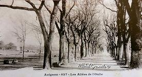 Allées de l'Oulle Avignon. Cartes postales anciennes. Michel Gromelle. Avignon la cité mariale.