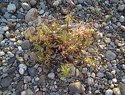 Piot flore 2.jpg