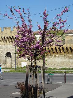 200407-Arbre en fleur.jpg