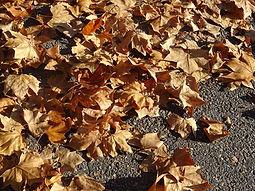 feuilles mortes s.jpg