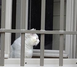 chat blanc.jpg