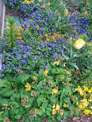 Av fleurs 2.jpg