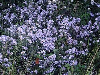 Barthelasse fleurs2.jpg