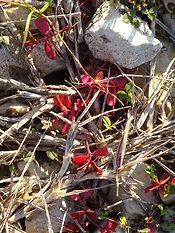 confluence fleur rouge.jpg