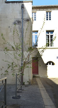 Arbre -Bouquerie.jpg