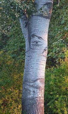 Barthelasse arbrevisage.jpg