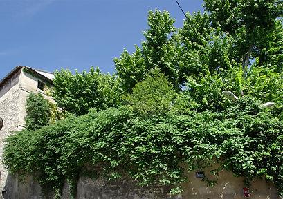 jardinRoiRené3.jpg