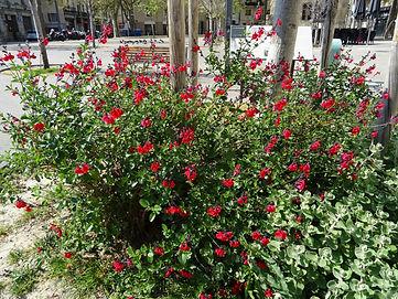 Jardin Place Pie.jpg