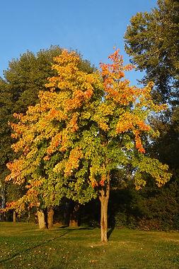 Barthelasse arbre.jpg