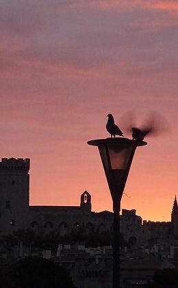 Oiseaux rose s.jpg