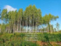 Купить участок ИЖС, Царское село, Шпаки, Березовая роща, Смоленск, Риэлт,89516944311