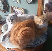 cat sitting torquay