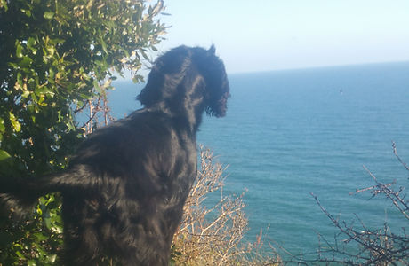 dog walker torquay torbay