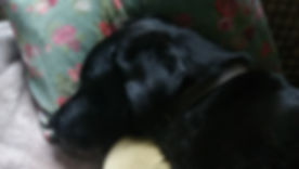 Pet sitting in Torquay