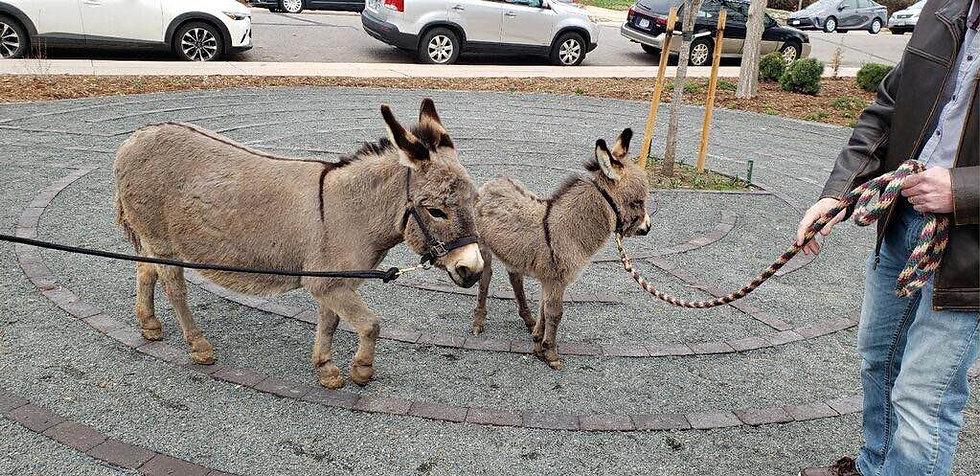 donkey labyrinth.jpg