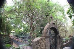 Casa entrada un cocodrilo (27)